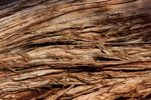 Old Juniper Bark - Moab