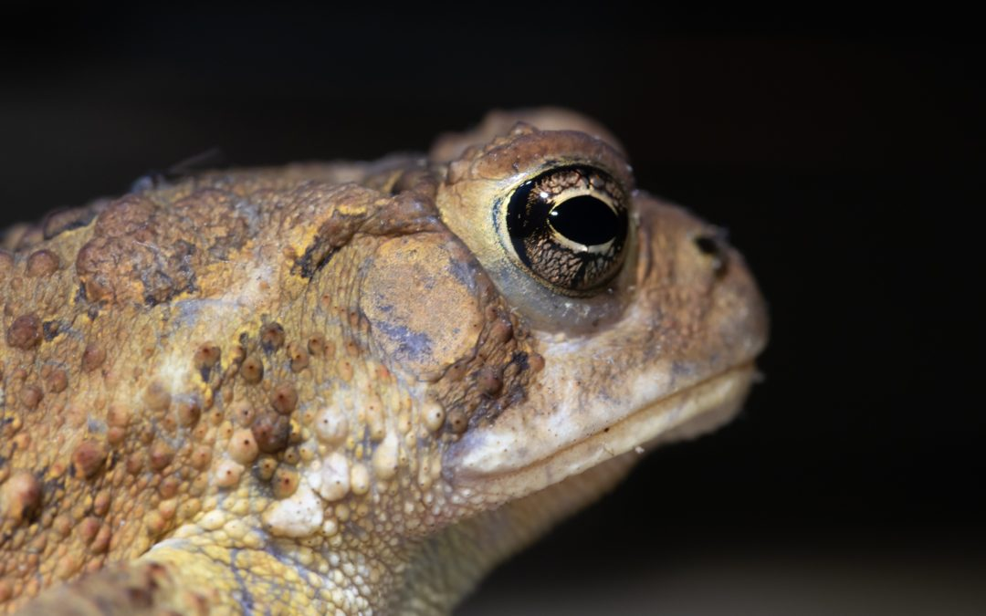 Frogs and toads and macro lenses, oh my!